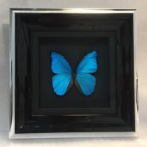Vlinder schilderij